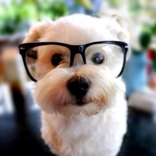 和眼镜分手,清晰爱情,双十一和爱尔眼科一起脱单吧!
