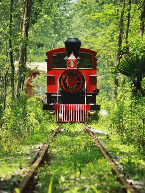 春游江淮请您来丨开往春天的小火车 合肥人只认那辆!