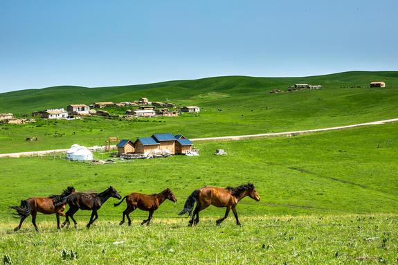 去新疆旅游为什么不用花什么钱?这才是最好的答案!岳圣