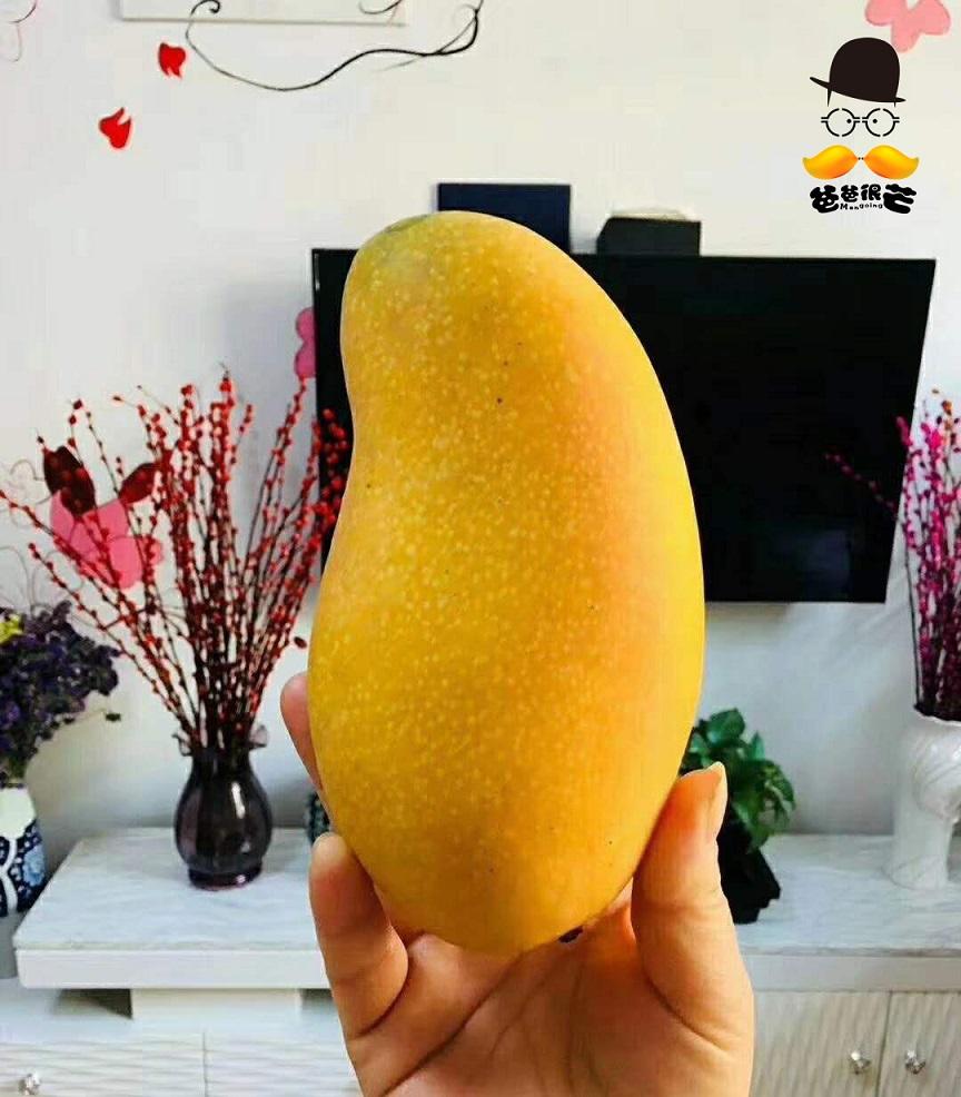这绝对是我吃过最好吃的芒果--爸爸很芒的味蕾暴击你扛得住吗?