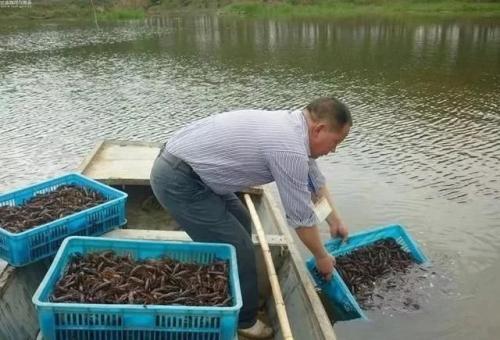 小龙虾养殖常用的4种饲料,养虾人快来学习一下吧!-焦点中国网