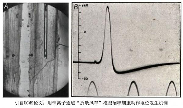 学者孙作东质疑美国生物学教科书 中国高中《生物》教材也存在问题