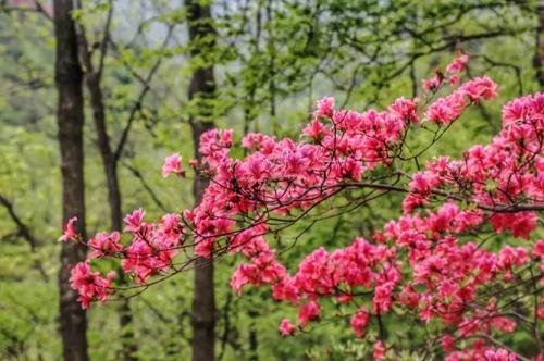 春游江淮请您来丨春日限定 中国的极致美 都藏在皖里
