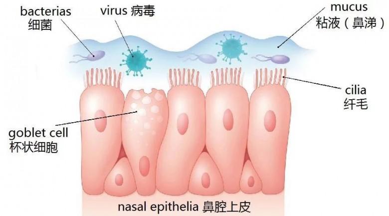全方位解读青少年鼻窦炎危害、病因及治疗方法